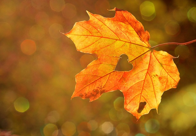 automne feuille